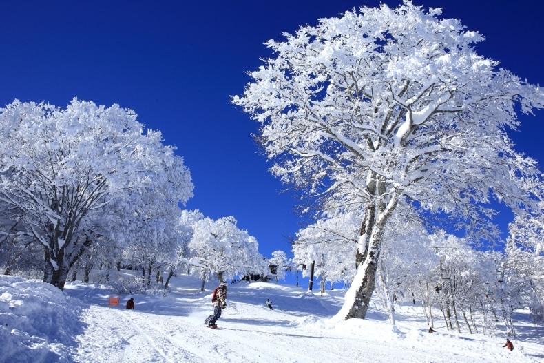 Nozawa Onsen Ski Resort Groomer SkiBookings.com