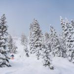 Aspen Snowmass Powder Tree Skiing