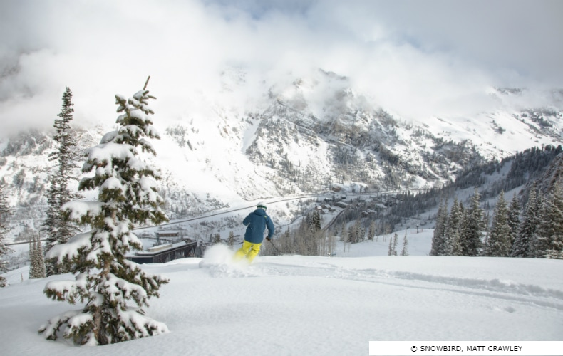 Snowbird Ski Resort Mountain & Terrain Powder SkiBookings.com