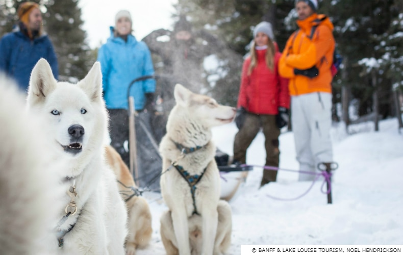 Banff Winter Ski Destination Dog Sled SkiBookings.com