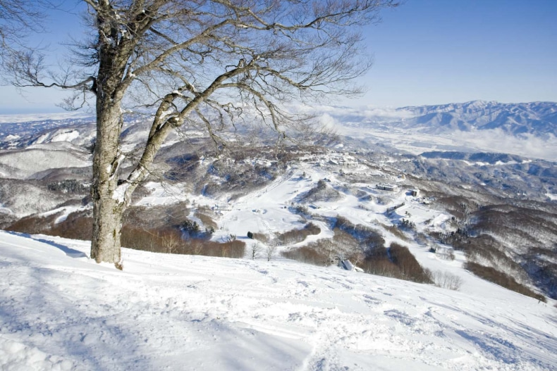 Madarao Ski Resort Japan SkiBookings.com
