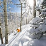 Beaver Creek Powder Trees Photo Credit Vail Resorts